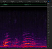 Chirp and trembling sound from 6 december - 2m16s.
